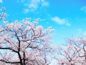 09f7e93623da1e3d847f600f87df7c02 s 300x225 - 【お花見2020】 関東・東京近辺のお花見スポット。海外からも人気で観光客も急増!
