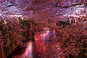 8c34bc2f940a0569a0ca6c787807265e s 300x200 - 【お花見2020】 関東・東京近辺のお花見スポット。海外からも人気で観光客も急増!