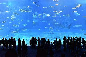 churaumi aquarium 2407812 640 - ゴールデンウィーク2020年、おすすめ沖縄旅行。 イベント・穴場・ツアーもチェックしよう。