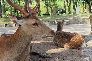 deer 3725744 640 - ゴールデンウィーク2020年、おすすめ関西旅行。 イベント・穴場・ツアーもチェックしよう。