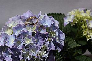 hydrangea 468187 640 - ジューンブライドの結婚式で入籍。おすすめの6月の結婚式の結婚式場・日取りは?