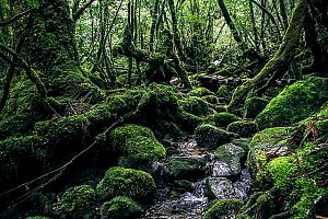 yakushima island 2336735 640 - ゴールデンウィーク、おすすめ九州旅行。 イベント・穴場・ツアーもチェックしよう。