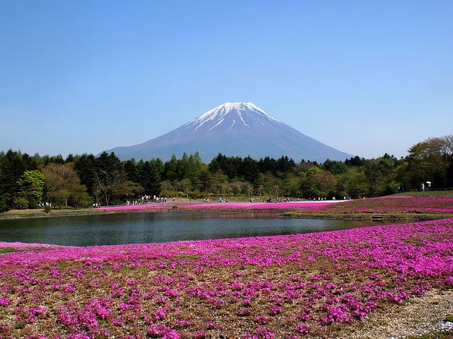 fuji 2828685 640 - 関東の芝桜を見に行こう!名所・時期・まつり